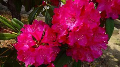 春の花を探して、新池公園から山本丸橋地区を散策しました その11。