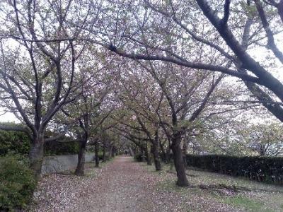 桜の季節に、武漢ウイルスについて考えてみた。