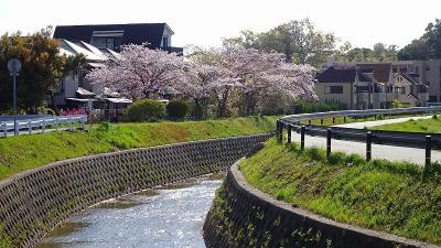 3日振りの散歩 宝塚市中筋から上の池公園まで行き、一周してきました その3。