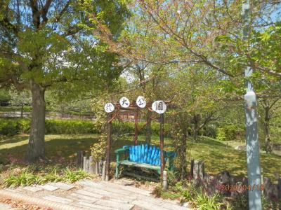 東浦 於大公園 八重桜がたくさん