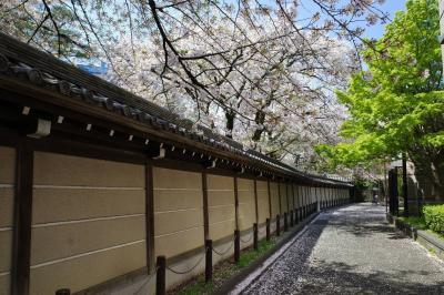 真盛寺~妙法寺 桜満開の寺院巡り