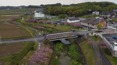 ふわり空撮 東浦町の八重桜