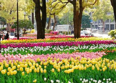 ひっそり花さんぽ。 ガーデンネックレス横浜2020