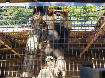 """2018年10月 大牟田市動物園に行ってきました。イベント""""ライオン舎の裏側探検""""、""""ライオンの肉探しタイム!"""""""