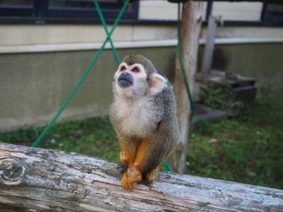 """2018年10月 大牟田市動物園に行ってきました。イベント""""キリンとのふれあいタイム""""、""""ヘビのにょろにょろガイド"""""""