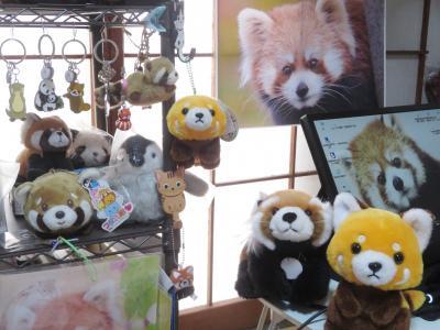 飼育の日:おうちレッサーパンダ~コロナウィルス感染防止対策で動物園に行けない日々を耐える~(随時写真を追加)