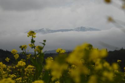 里山のSocial Distancingは熊、収穫山菜の天ぷらはサクサク
