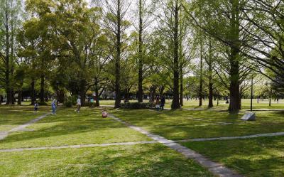 ウオーキング  午後に各務原市民公園辺りを散歩 花を愛でる