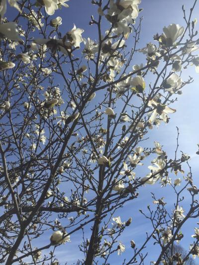 咲き始めた春の花々