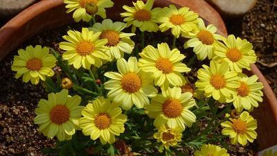 昼から「みどりのプラザ」に咲く、花の撮影に行きました その2。