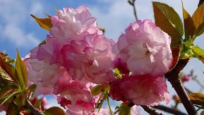 昼から「みどりのプラザ」に咲く、花の撮影に行きました その3。