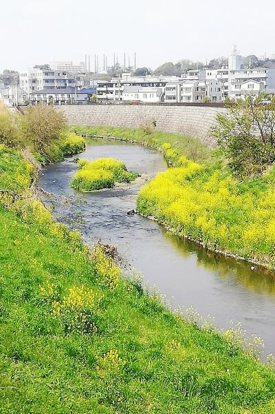 野川を歩く