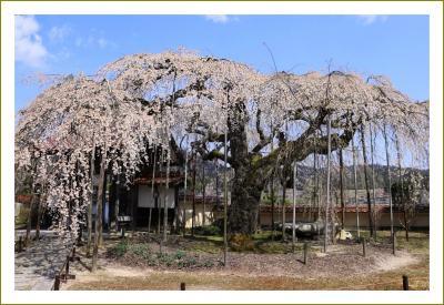 2020 枝垂れ桜巡り ~広島・北広島町~