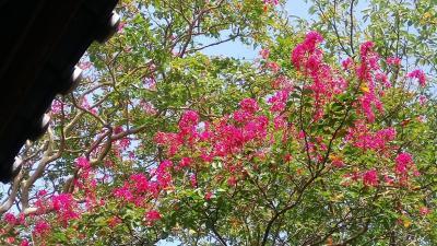 鎌倉・宝戒寺に花の写真を撮りに行った日