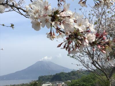 近場の桜が咲いてきたので撮って見ました