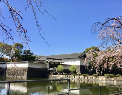 桜の皇居周辺散歩