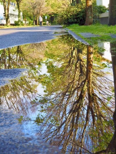 水たまりにときめく、雨上がりの散歩道