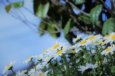 小さき妖精が舞う♪たきがしら湿原 ~太陽の光 再び~