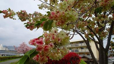 みどりのプラザと天神川堤の花見を堪能し、荻野地区の散策をして帰りました その3。