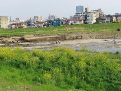 川口川沿い・清水公園をポタリング&スシロー 楢原店 八王子 2020/04/26