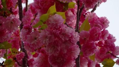 みどりのプラザと天神川堤の花見を堪能し、荻野地区の散策をして帰りました その4。