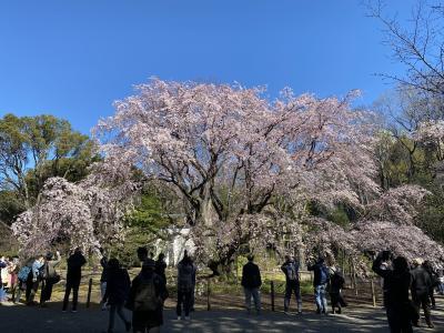 2020年3月 六義園&小石川後楽園で花見
