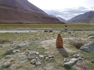 インド・ラダック~天空曼荼羅の旅⑧ヒマラヤンマーモット(*´ω`*) と世界で2番目に高い峠
