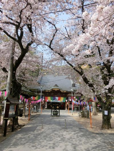 川越お花見散歩(2019年4月)