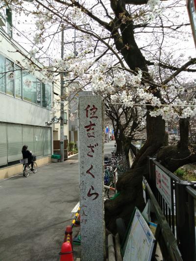 2020年桜の記録~元住吉散歩~