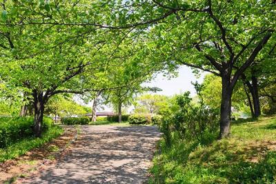 ここちよい緑と花のある癒しの空間