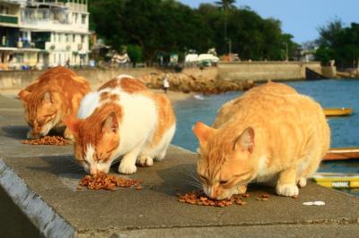 香港★香港は今日も元気です 坪洲3 のんびり島猫さんぽ 帰りはフェリーで坪洲から愉景灣へ