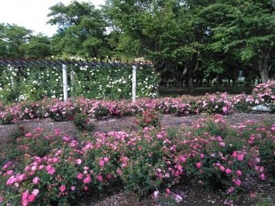 松本空港のそばにこんなキレイな花園が