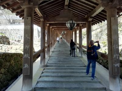 こんな時だけど…三月の 京都・奈良 ②奈良編