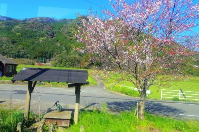 筑肥線等初乗車☆乗ってるだけで桜巡り旅