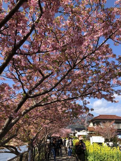 2020年2月、河津桜を見るために。1泊2日、母と二人旅 その①