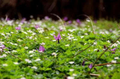 ◆花・花・花咲き乱れる白河・天狗山