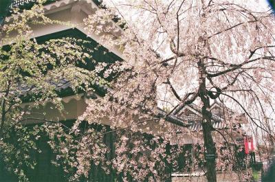 甲州から信州 八重桜と共に城址散策とグルメ・ショッピングのぶらぶら歩き旅