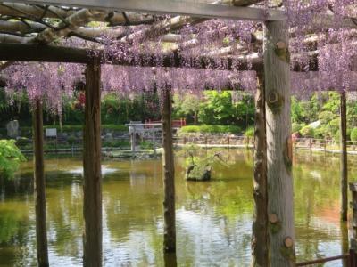 越谷久伊豆神社の藤を見て周辺を散策