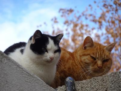 ◆スペイン一人旅◆④グラナダ:猫日和のアルハンブラ宮殿