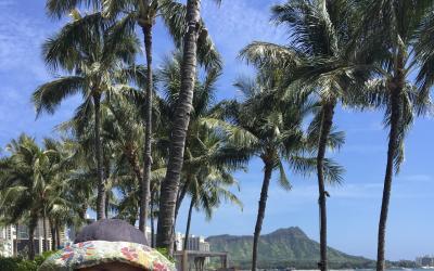 コロナでキャンセル: 2020春休み ハワイ家族旅行