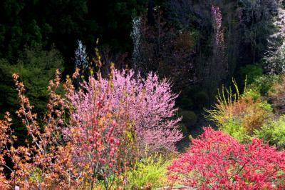 ◆春色の花曼荼羅~山森沢・桃源の里