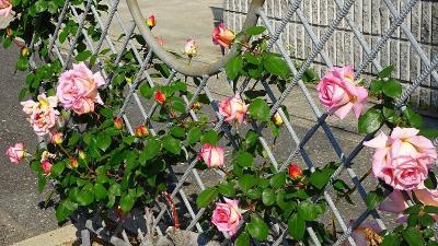 荒牧バラ公園へバラを見に行きましたが、休園日で付近を散策しました 上巻。