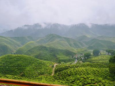 【2020年マレーシア】 7 キャメロンハイランドという名の避暑地の茶畑に行く