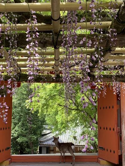 奈良公園 私の散歩道