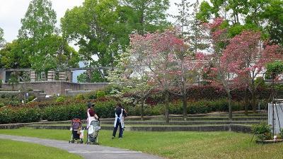 バラ公園とみどりのプラザへ、ぶらりと散歩に出掛けました 中巻。