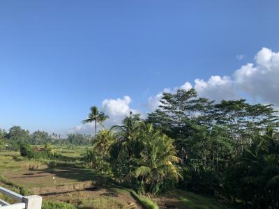 凧揚げシーズン到来!バリ島は乾季です。