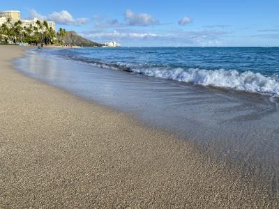 モンクシールもビーチで昼寝