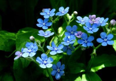 ◆福島・四季・彩々・Part,87・惜春の候