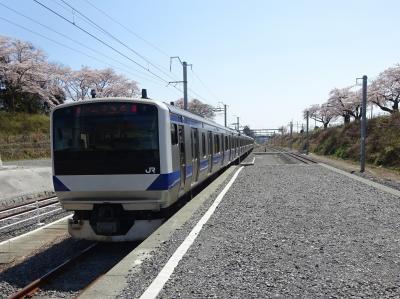 人のいないところへ2 常磐線復旧区間に行く【その3】 桜が満開、でも閑散とした夜ノ森駅周辺