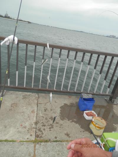武豊緑地6午後の釣り始め